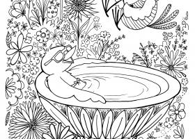 Birdbath Cannonball